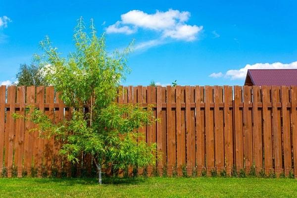 Distance arbre maison assurance